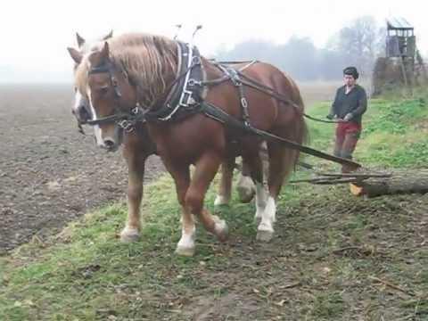 Holzrücken mit Pferden Kurs 11/2012 - YouTube