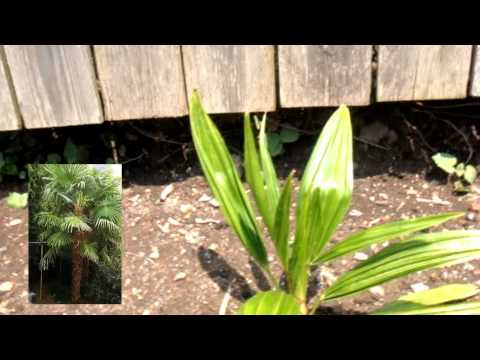 Tropical plants and alternative plants for PA