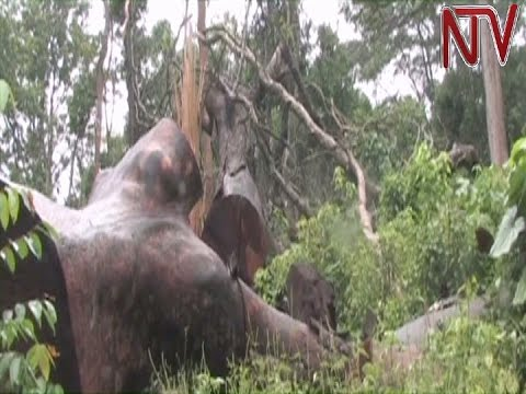 Government to lease part of Zoka forest reserve in Adjumani