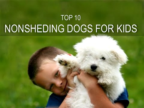 Top Ten Hairy dogs that doesn't shed and are good for kids