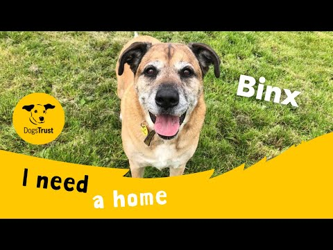 Binx the Clever Crossbreed Knows so Many Tricks! | Dogs Trust West Calder