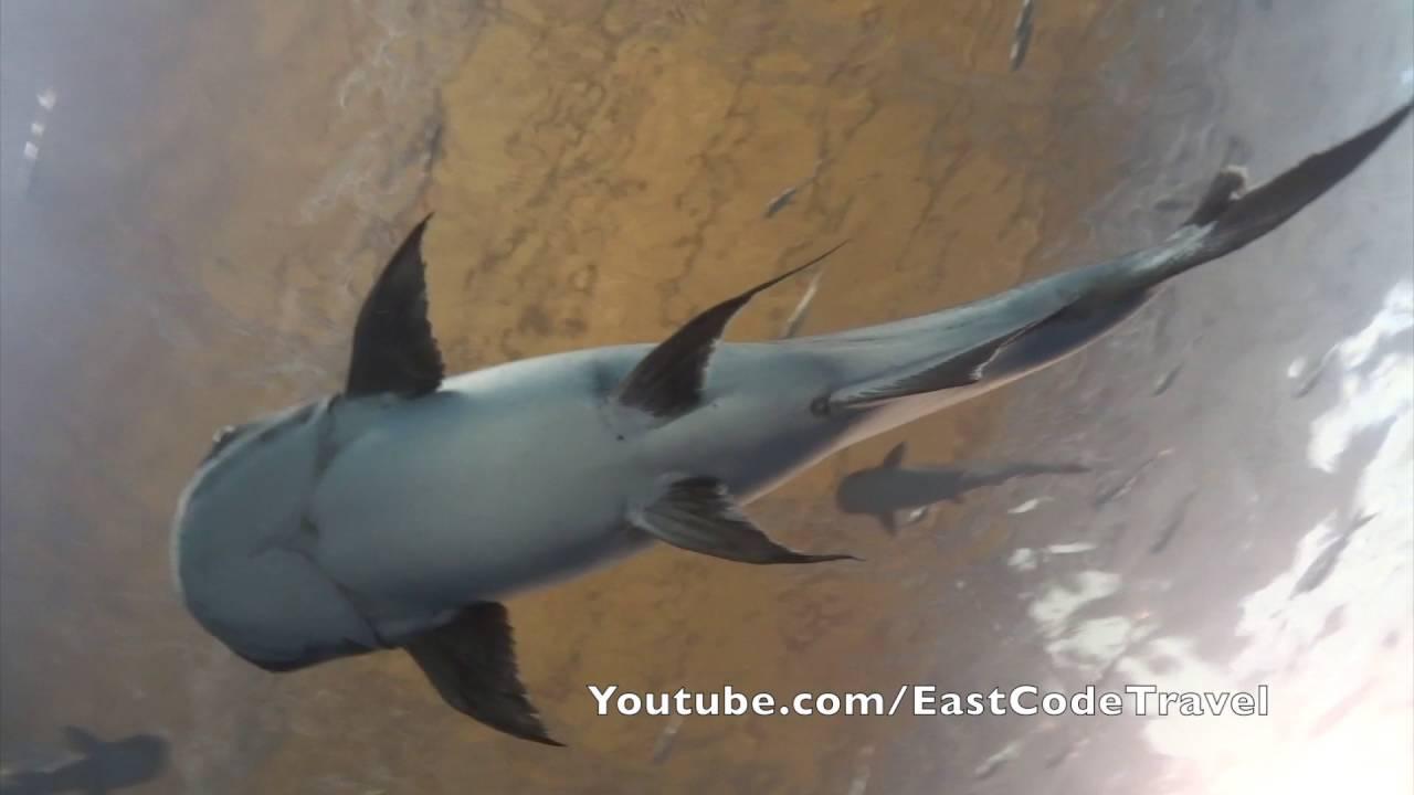 Fish aquarium on youtube - Thai Fresh Water Fish Aquarium