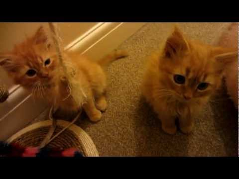 Cute Kittens Film - From birth to 8 weeks