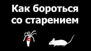 видео: Голодные мыши не стареют. Александр Панчин на QWERTY