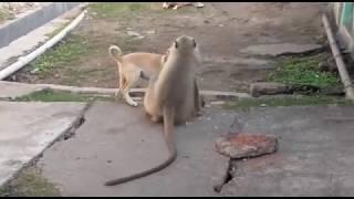 Lovar boys monki and dog