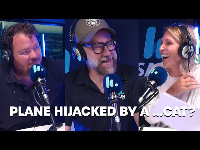 Plane Hijacked By A ...Cat?   Bec Cosi & Lehmo