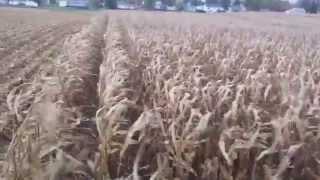 Carman Farms Harvest 2013