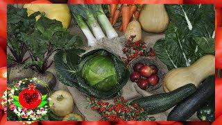 8 щелочных продуктов, которые помогут очистить и удалить все кислоты из вашего организма!