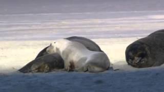 Очень смешное видео про животных!!!!