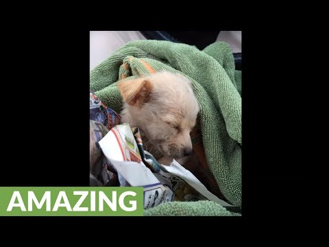 Rescued homeless dog goes through amazing transformation