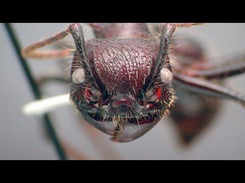 ТОП 10 Самые опасные насекомые в мире.