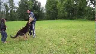 Pies staje w obronie dziewczynki