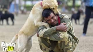 इस कुत्ते को सारी आर्मी सलाम करती है जानिये क्यों  SAD STORY OF DOG