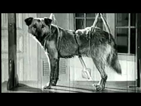 Shocking Pavlov's Experiment on Dogs -Classical Conditioning - Ivan Pavlov