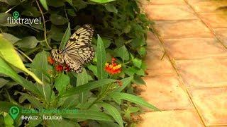 Istanbul Kelebek Çiftliği tanıtım videosu