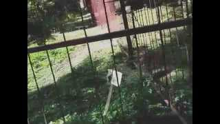The Lattice Fence In The Heart Of The Wood Vid 20140907 133219