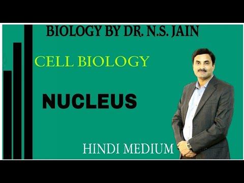 Nucleus (केन्द्रक) Cell Biology|Class 11th+NEET|Hindi Medium