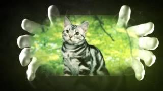 История кошек или что можно сделать используя видео монтаж.
