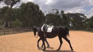 How to stop your horse from rearing