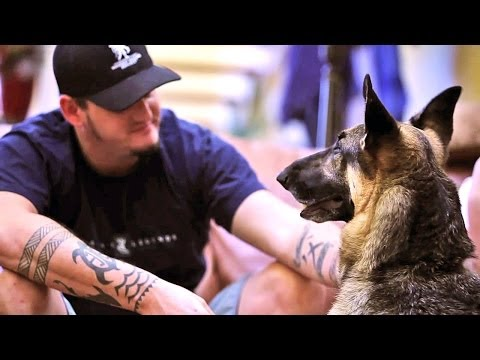 Will American Airlines Take Service Dog In Training