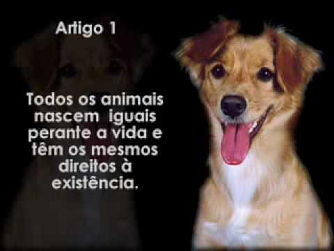 """Resultado de imagem para direito dos animais"""""""