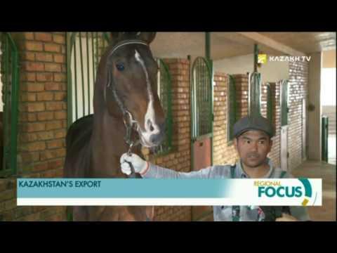 Kazakhstan to export elite stallions to China