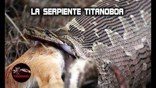 vuclip Serpientes gigantes: TITANOBOA REAL – Las serpientes mas grandes del mundo