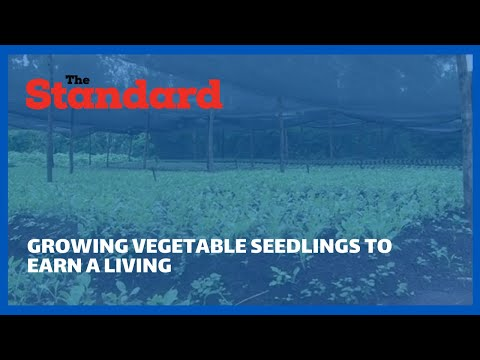 Meet Geoffery Sang who ventured into growing vegetable seedlings to earn a living