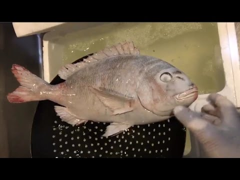 It's a miracle, Dead frozen fish comes back to life