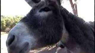 Donkey: The Mystique of Equus Asinus Book Video