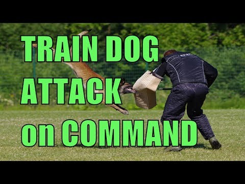 How to Train Dog to Attack on Command at Home , 14 Easy Steps, Dog Training
