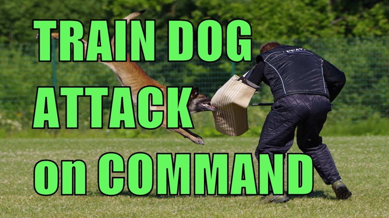 How To Train Dog To Attack On Command Video