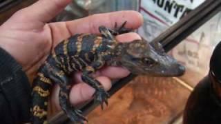 hamburg reptile show 2010 part 2