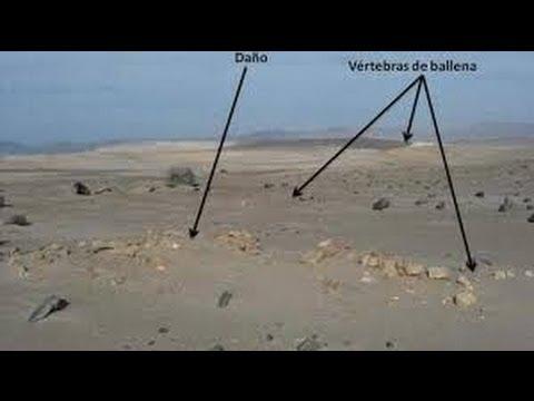 Rally Dakar: Destrucción de Fósil de Ballena / Whale Fossil Destroyed [IGEO.TV]