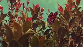 Dreamer - Phil Madsen