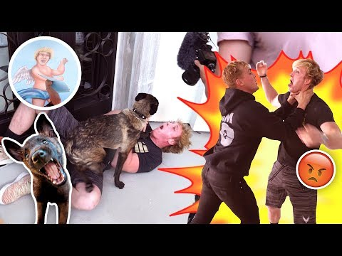 HERE'S WHY APOLLO ATTACKED BROTHER LOGAN {{PRANK WARS IS BACK}} thumbnail