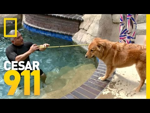 Healing Waters | Cesar 911