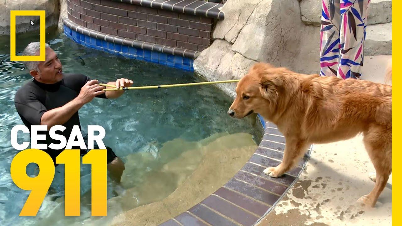 Healing Waters | Cesar 911