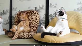 Best funny Animals Compilation Video 3