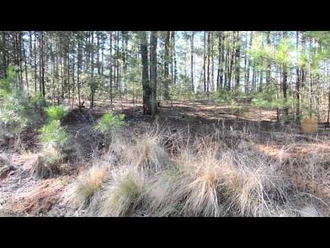 2419 W Paradise Harbor Dr - Connelly Springs, NC 28612