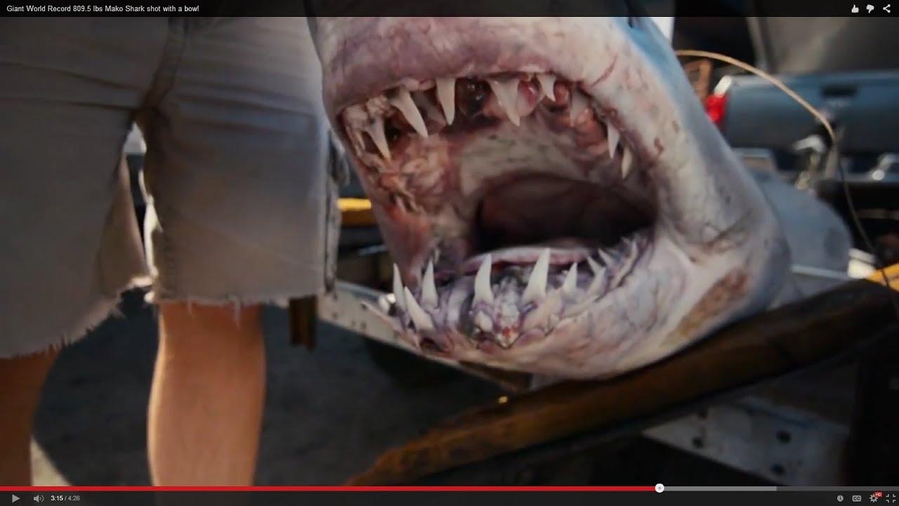 "Mako Shark Street Signe semaine Ocean dangereux DENTS mammifèreIndoor//Outdoor18/"""