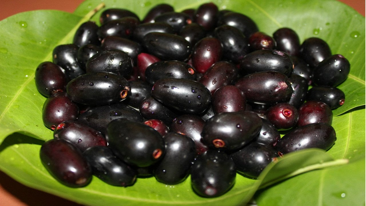 Image result for Jamun Fruits