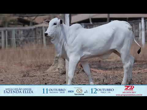 LOTE 141
