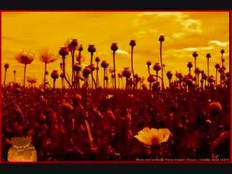 Opium  Marcy Playground