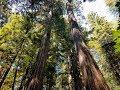 "Capture de la vidéo Hiking Muir Woods (""greenland"" - Emancipator)"