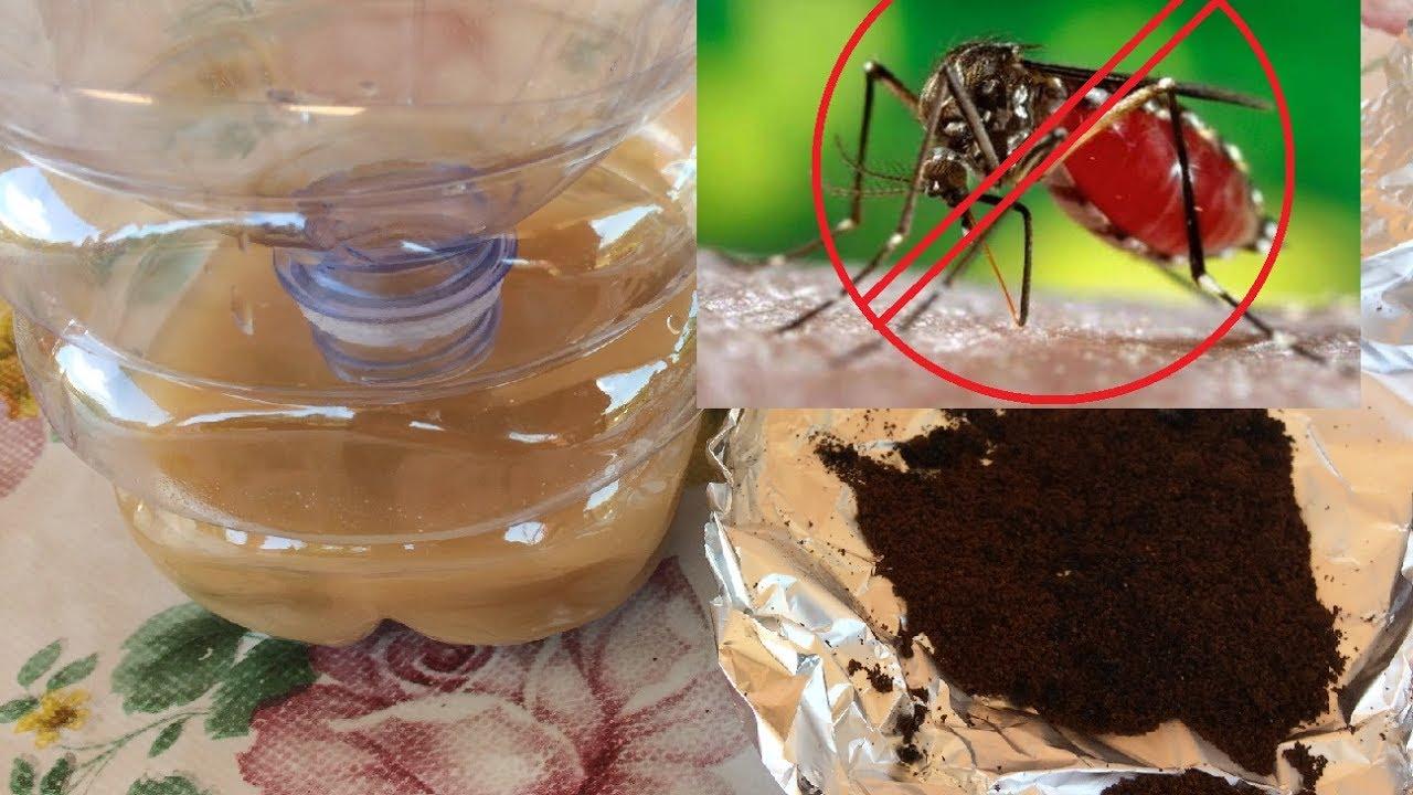 2 rimedi naturali contro le zanzare youtube - Rimedi contro le zanzare in giardino ...
