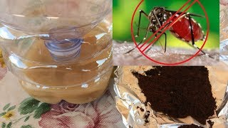 2 Rimedi Naturali Contro le Zanzare