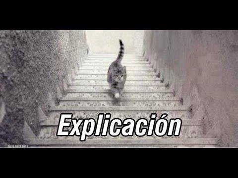 El gato baja o sube las escaleras soluci n explicaci n for Escaleras que suben y bajan