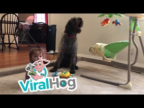 Kyle Anthony - Pooch Teaches Toddler to Sit