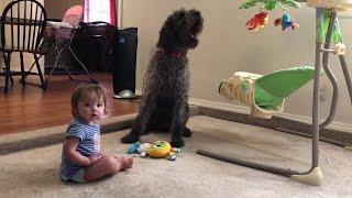 Pooch Teaches Toddler to Sit    ViralHog